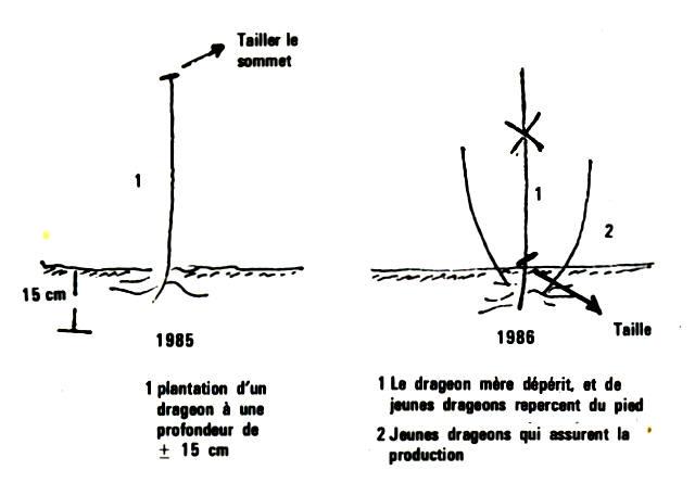 Cercle horticole fosses 22 - Comment tailler les framboisiers ...