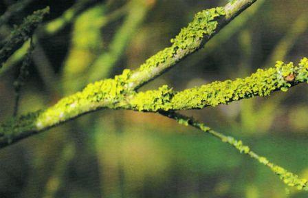 Couperose rosac e traitement naturel - Maladie du buis traitement naturel ...